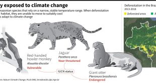 Deforestation + climate change = dead end for wildlife