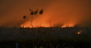 Forest fires destroying vital buffer against climate change