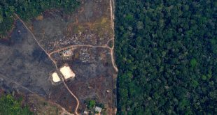 Revised data shows deforestation in Brazil Amazon at decade high