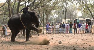 Bangladesh's biggest zoo calls time on elephant rides