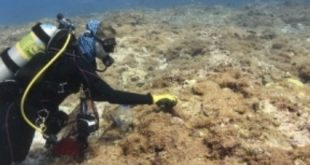 Tumbleweed-like algae recently discovered northwest of Hawaiian Islands, invading marine habitats