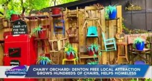 Chairy Orchard grows hundreds of chairs, helps homeless